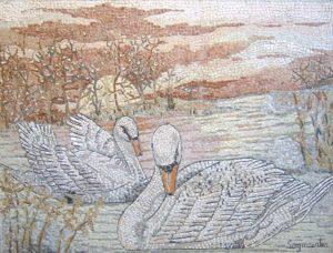 Cigni / Swans