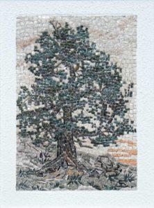 Cirmolo di Lerosa / Lerosa pine