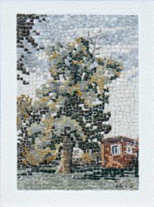 Liriodendro di casa Buzzati / Buzzati tulip tree