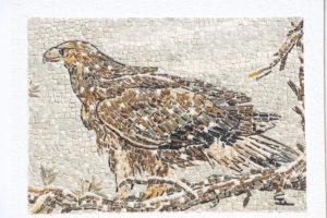 Aquila / Eagle