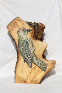 picchio nel legno / woodpecker in the wood